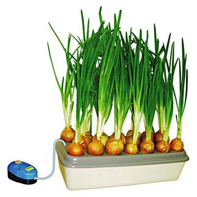 """Грядка дома """"Луковое счастье"""" для выращивания растений на балконе или в комнате."""